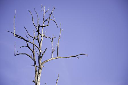 sequias: la sequía árbol, árboles muertos