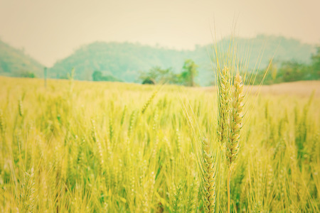 acres: Beautiful acres of barley