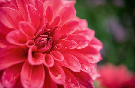 Pink flower in very high detail. Stunningly beautiful and symbolises love