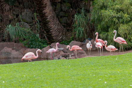 meeting of flamingos photo