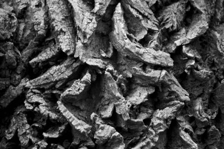 contrasty: A very think textured bark in contrasty light.