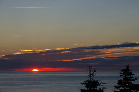 The sun just comes over the horizon over the Atlantic Ocean with a pair of trees in the foreground.