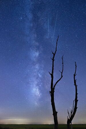 silhoutted: The Milky Way is visible as a pair of shooting stars fall through the sky behind a silhoutted dead tree snag.