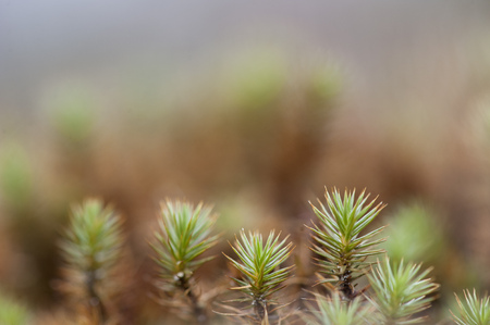 A close up detailed view of a small clutch of pine growing on the ground.