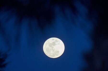 A bright white full moon in a deep blue sky with out of focus palm trees in the foreground. 版權商用圖片