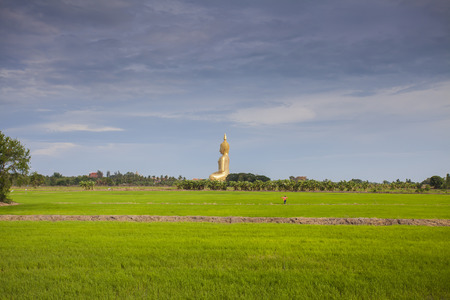 rice field and wat muang big buddha in angthong province, thailand photo