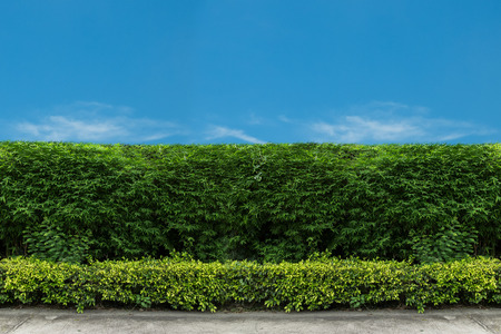 fence: green fence with green lawn Stock Photo