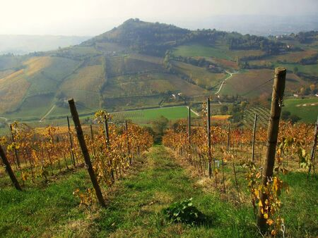 vineyard in the autumn in the mountains