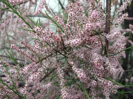 Spring flowering branch Stock Photo - 13459073