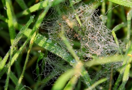 dew on a spider web photo