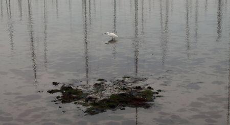 white egret Stock Photo - 17336477