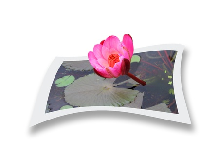 water lily Stock Photo - 17360066