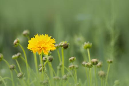atmospheric: yellow flower, atmospheric photos