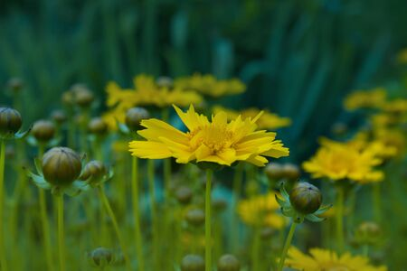 atmospheric: yellow flower, atmospheric photos
