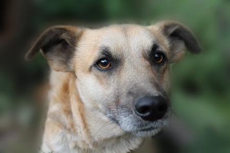 domesticated: mongrel dog portrait very close up