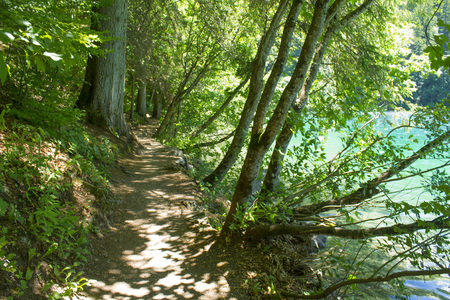 path in the forest, Lake Tovel, Italy Stock Photo