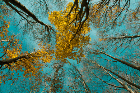 Colorful autumn tree in forest. view from below against the blue sky