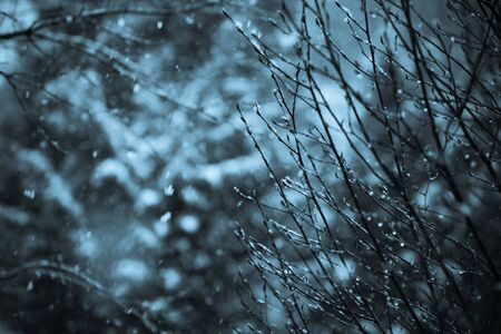Snowing Tree Branches