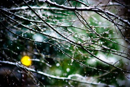 Snowing Ice Tree Branches