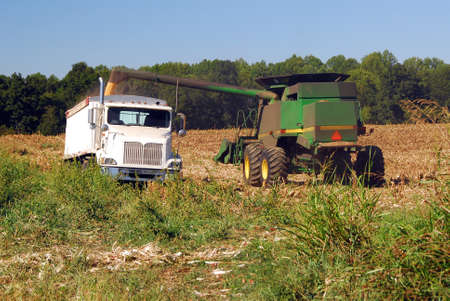 Farm equipment combine in a corn field to harvest corn and transport to the grain silos for multiple uses, either food for human or livestock, or for making ethanol E85 fuel. The bio fuel used in vehicles around the world.