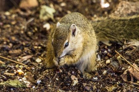 terrestrial mammal: squirrel Stock Photo