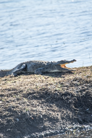 cold blooded: crocodile Stock Photo