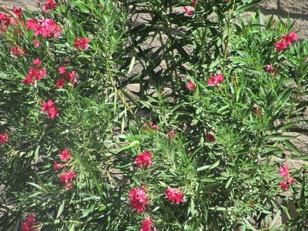 zoomed: Desert Flowers semi zoomed