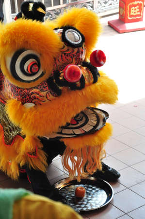 lion dance: Chinese new year Lion dance
