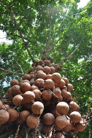 potrait: fruity tree potrait Stock Photo