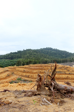 barren: Barren Forest Stock Photo