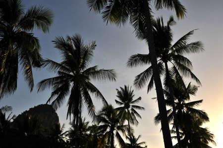 railey: alberi e tramonto