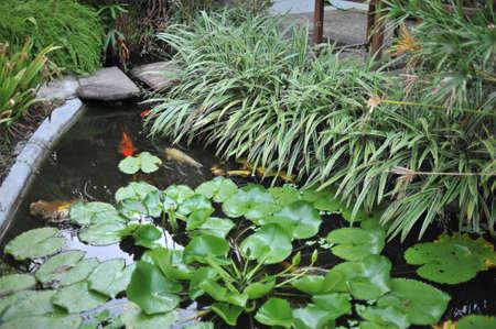 railey: laghetto con pesci koi