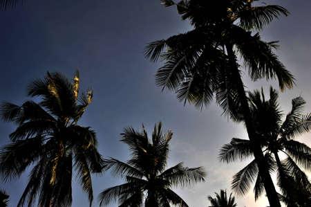 railey: vista serale di alberi e cielo