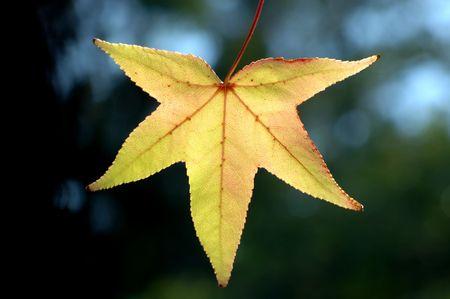 macro photography: Leaf in Autumn Stock Photo