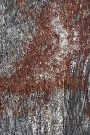 peeling paint: Close-up di peeling pittura su legno Archivio Fotografico