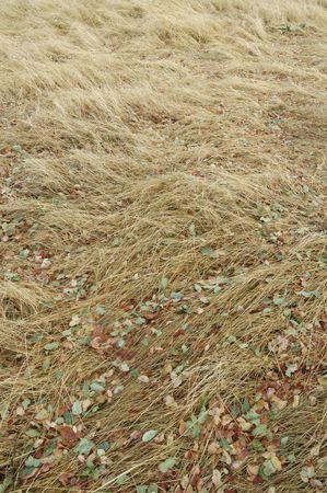 wild grass: Hojas ca�dos coloridos Y Grass Wild Foto de archivo