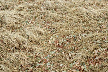 野草: カラフルな落ち葉と野草