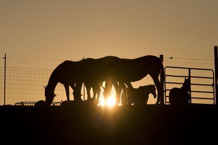 Horses On Ranch photo