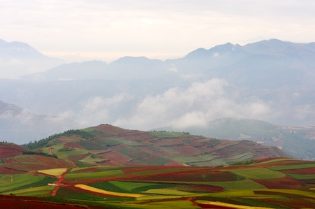 agronomic: Fields landscapes in Yunnan Province, southwest of China