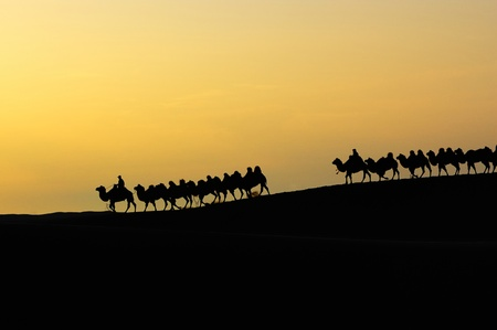 Camel team in the desert at dawn photo