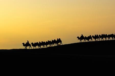Équipe de chameaux dans le désert à l'aube