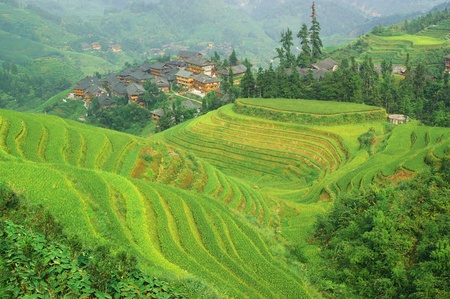 Green rice terrace in Guangxi province, China Stock Photo - 8405974