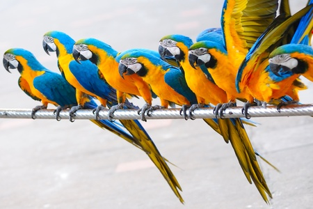 parrot tail: Parrot birds standing in a row