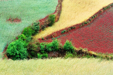cropland: Wheat field landscape in Dongchuan district, Kunming city, Yunnan province of China