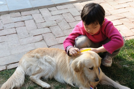 Asian kid playing with golden retriever dog in the yard photo