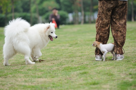 bluster: Two dogs playing together on the lawn Stock Photo