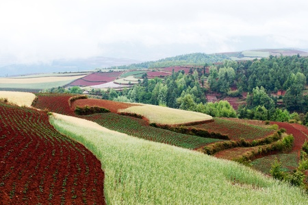 agronomic: Rural colorful field landscape in Dongchuan district, Yunnan province, China