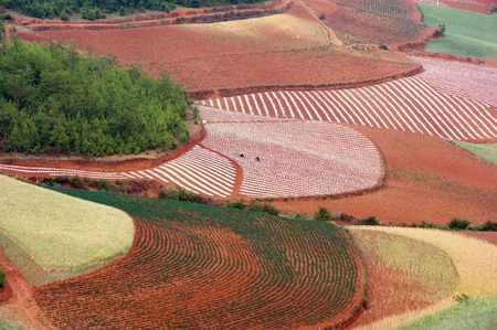 agronomic: Field landscape in Yunnan Province, southwest of China