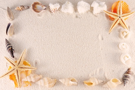 Group of seashells, starfishes on the sand photo