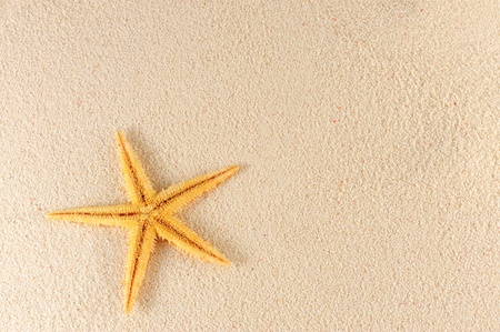 One starfish on the sand of the beach photo